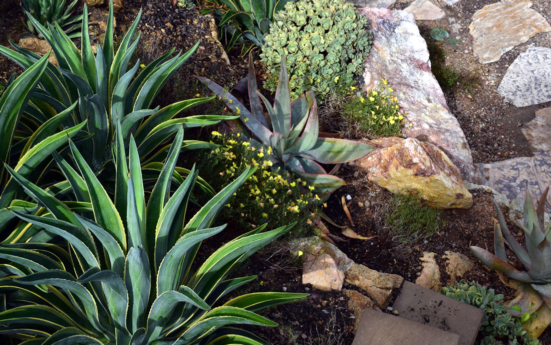 Xeriscape Drought Resistant Landscaping Gallery Of