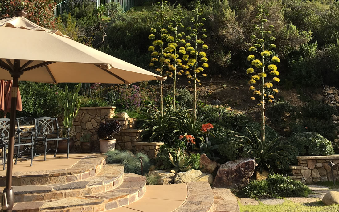 Xeriscape Drought Resistant Landscaping Gallery Of San Diego